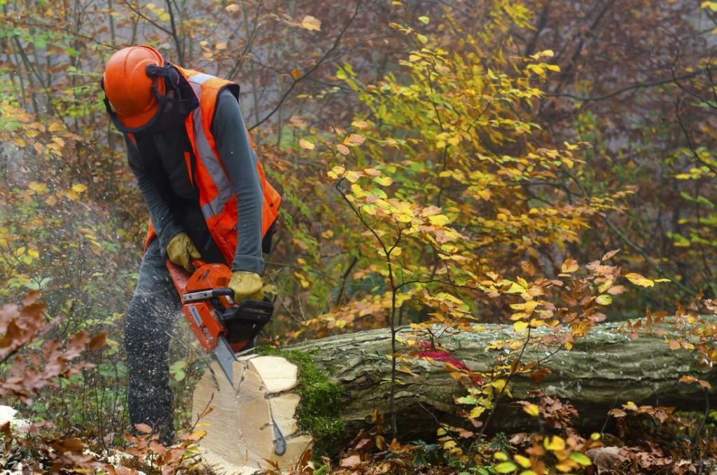 guy cutting a fallen tree