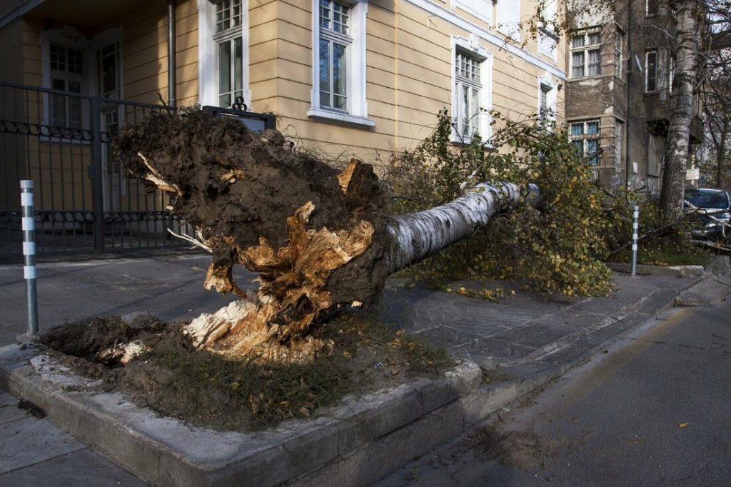 fallen tree on the street