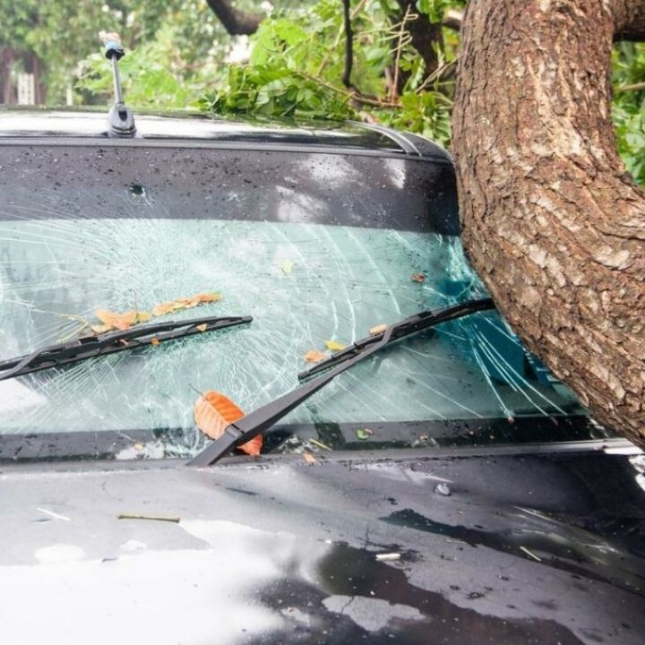 trunk fell on the windshield of a car