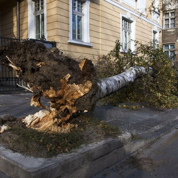 fallen tree because of storm to be removed by panama tree removal company