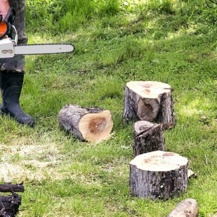 arborist removing the stump
